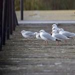 A Balatont már elvitte a NER, most a Fertő tó következhet