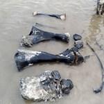 Nagyon sok mamutcsont került elő egy szibériai tóból – fotók a felfedezésről