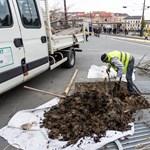 Már bontják a Széll Kálmán teret az elszáradt fák miatt