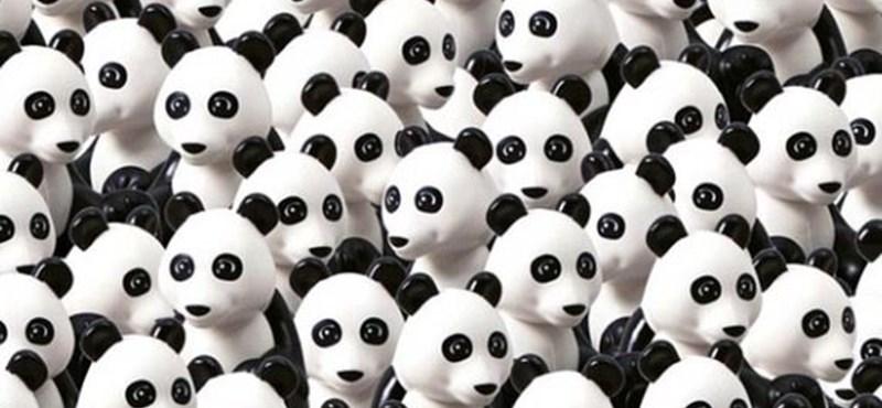Ha megtaláltad a pandát, vajon megtalálod a kutyát is?