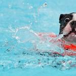 Szigorodó szabályokat kell követniük a kutyatartóknak
