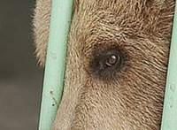 15 év után szabadult egy börtönben raboskodó medve