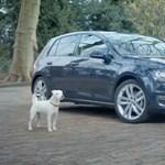 Amikor a kiskutya VW Golf akar lenni - videó