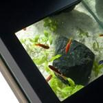 Törje le irodai akváriummal dolgozói rosszkedvét!
