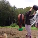 Videó: Csúnyán félresikerült Falus Ferenc jeges vizes kihívása