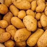 Krumplit és almalevet osztanak a pestszentlőrinci nyugdíjasoknak