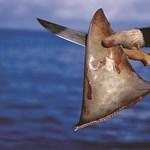 Határozott európai uniós fellépés a cápák csonkolása ellen