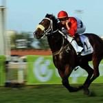 Megvan Overdose lovasa