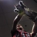 8 dolog, ami még ma megölheti a macskáját