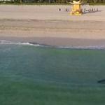 Egy nap alatt ez a második súlyos cápatámadás az ausztrál paradicsomban