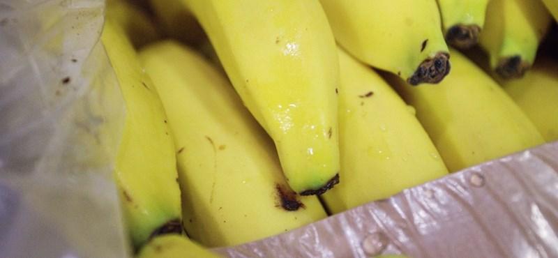 Banán után sült krumplit ragasztottak szigszalaggal falra