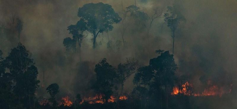 Brazília nem kér az amazóniai tűzoltásra szánt 20 millió dolláros gyorssegélyből