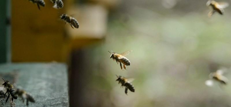 Hiánycikk a méhcsípés-allergiások életét megmentő injekció