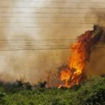 Egyre több erdőtűz pusztít a világ legnagyobb trópusi mocsárvilágában