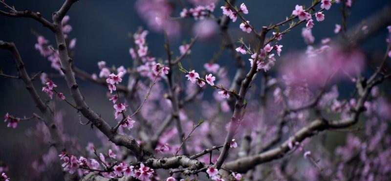 Marad a nyugodt, tavaszi idő