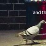 Ennél pihentagyúbb reklám ma már nem lesz: a bulizó galamb az új sláger