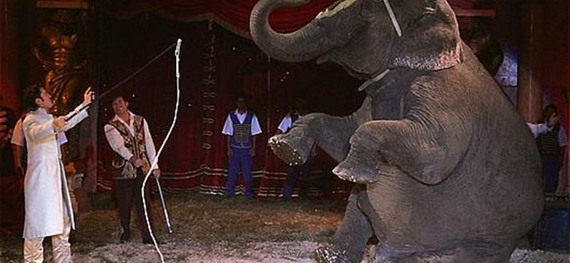 Richter József Fekete Pétert húzott, leváltották a Nemzeti Cirkusz éléről