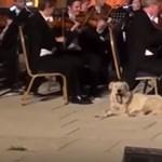 Koncert közben sétált fel egy kutya a színpadra, lefeküdt a zenekar mellé – videó