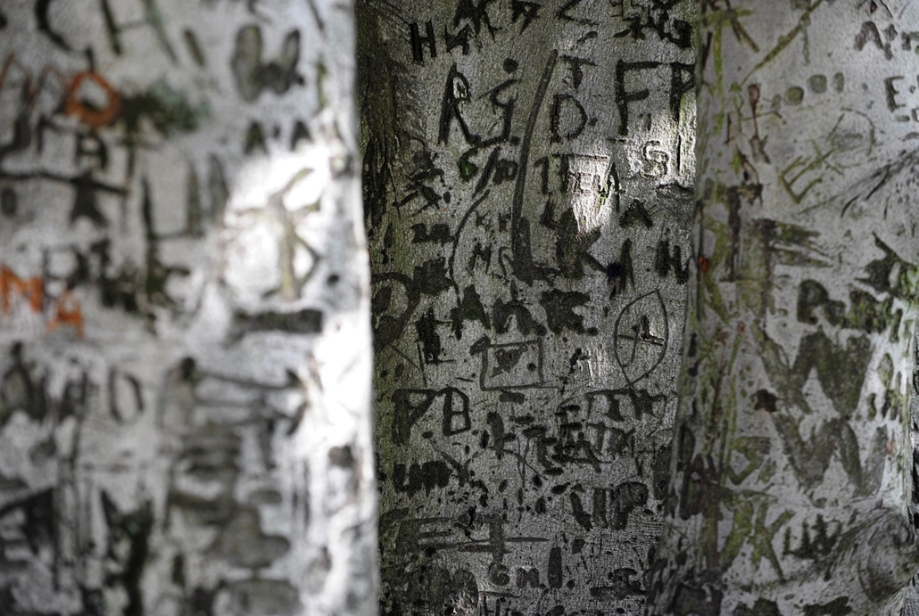 Fák világnapja - GERMANY, Berlin : Letters and signs are carved into the bark of a tree in a park Berlin on October 4, 2010. Autumn brought a warm and sunny day to the German capital