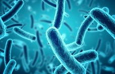 """A koronavírusból is nagy baj lehet, de az """"X betegség"""" meg nagyobb fenyegetés lenne"""