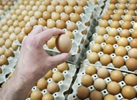 Jó hírek karácsony előtt: Nem drágul a tojás