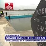 Valósággá vált B-horror: cápa volt a medencében - videó