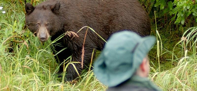 Összeszámolták, hány embert ölt meg a fekete medve