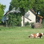 Nyolcszázmilliót költ a kormány tanyafejlesztésre
