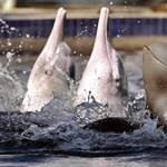 Háló okozhatta több tucat delfin halálát