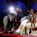 Autós szafarival pótolná a bevételkiesést a Magyar Nemzeti Cirkusz