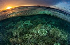 A gazdaságnak is jót tenne, ha természetvédelmi terület lenne a Föld a harmada