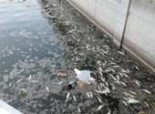 Mohosz: A Velencei-tavi halpusztulás szívfájdító látvány, de nem jelentős