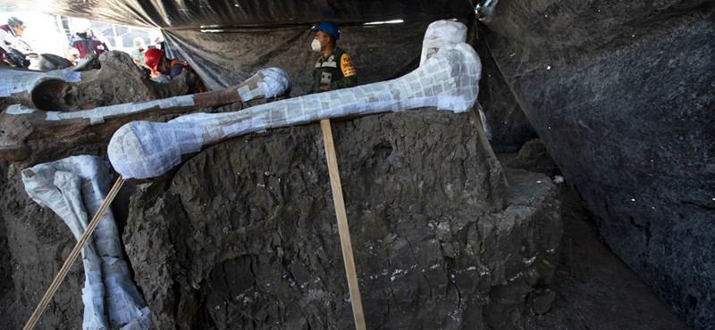 Kétszáz mamutcsontvázat találtak Mexikóváros mellett
