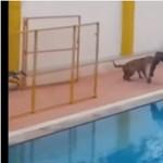 Leopárd szabadult be egy indiai iskolába, nagy volt a rémület – videó