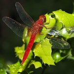 A malária és az emberi légzés is előkerült az  idei biológiaérettségin