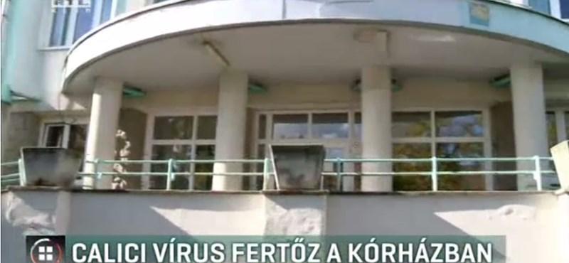 Újra megjelent, a vírus, Calici-járvány van az egyik miskolci kórházban