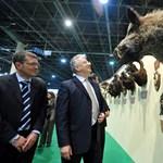 Negyedmilliárdból újítottak fel egy 126 éves pavilont a vadászati kiállításra