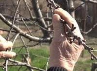 Gyümölcsfákkal segítette a falut, fát loptak tőle