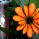 Kinyílt az első virág az űrben – fotó