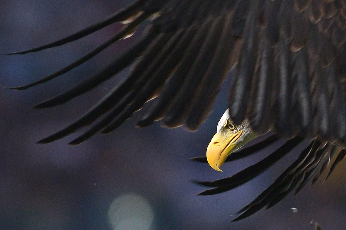 Óriásbaleset az M5-ösön, a Sólyom repít és etet - a hét képei - Nagyítás-fotógaléria