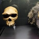 Új alfajt fedeztek fel az ember családfáján