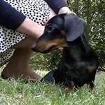 Klónozott kutyának születtek kölykei Angliában