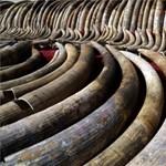 Sorost is meghívták a nagy kenyai elefántcsont-égetésre