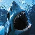 A legtöbb cápatámadás vasárnapra esik