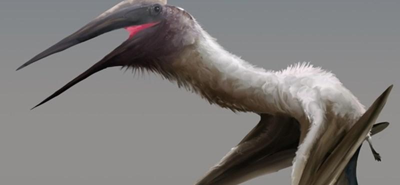 10 méteres szárnyfesztávolságú repülő hüllő élt az ősidőkben Kanadában