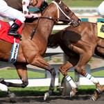 Három ló elpusztult már Dustin Hoffmann sorozatának forgatásán