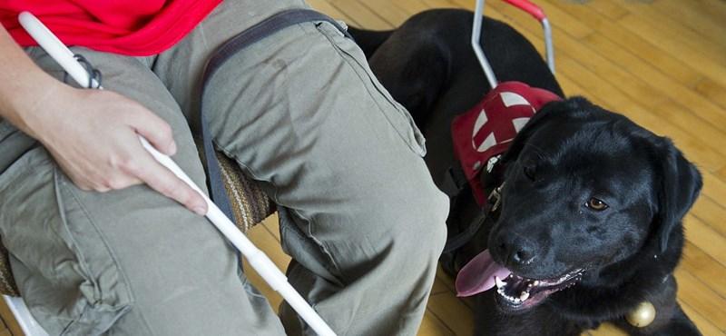 Kiküldtek egy vak férfit a kutyájával a János-kórház büféjéből