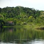 """Megölik a Föld """"tüdejét"""", ha tovább folytatódik a brazil fakitermelés"""