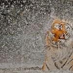 Íme a legjobbak: a National Geographic fotópályázatának győztesei - Nagyítás-fotógaléria