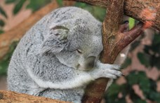 Csak óvatosan a délutáni alvással, ne legyen több 90 percnél
